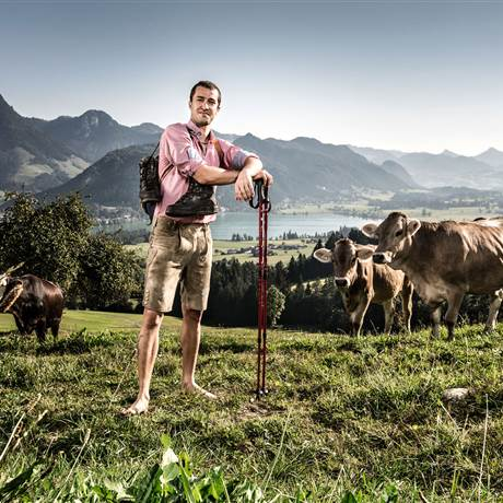 Man stands barefoot on a mountain meadow between cows