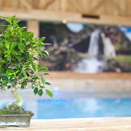 Decorative plant on the pool edge of an indoor swimming pool