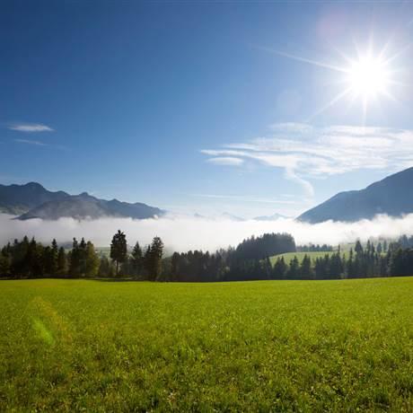 Wiesenlandschaft bei Sonnenaufgang im Sommer